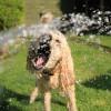 Hogyan hűtsd le kimelegedett kutyádat?