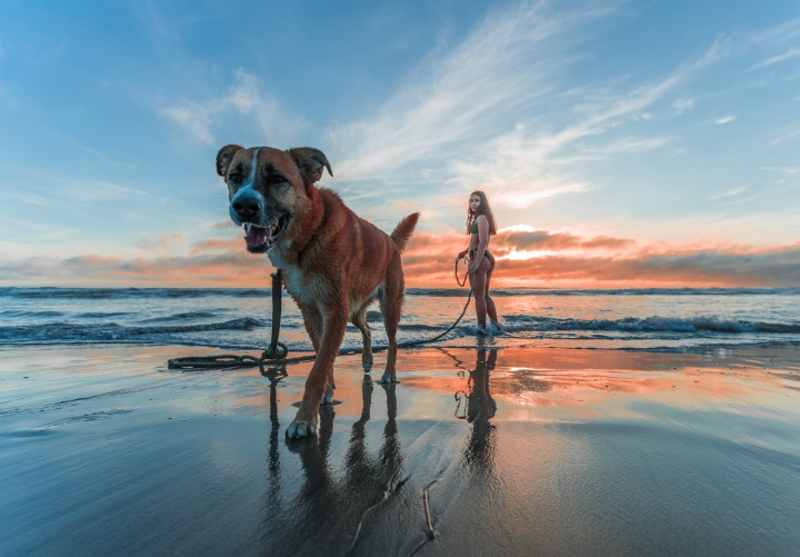 woman-wearing-bikini-walking-on-beach-shore-with-adult-brown-1143369_01