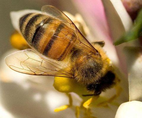 A méhek színe a ragadozók elriasztására szolgál