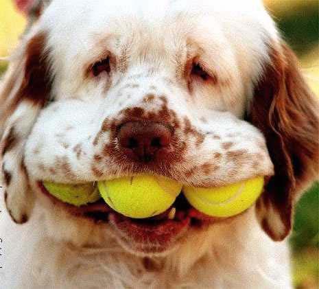 kutya-tenisz