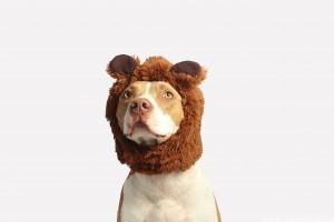 A kutya és a bélgáz: mit tehetünk ellene?