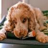 Kutyapanzió - ha nincs kire bízni a kutyát