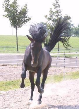 Boldogságában bakoló ló