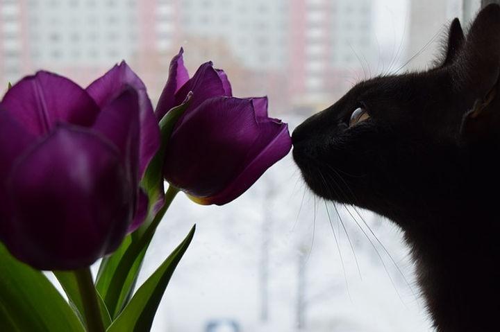 cica_macska_tulipan_viragok_02