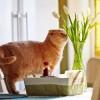 Állatokra veszélyes, mérgező virágok