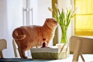 Állatokra veszélyes, mérgező vágott virágok
