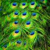 A Föld 10 legszínesebb madara