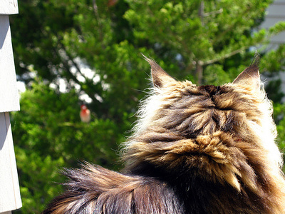 macska-madarra-vadaszik