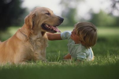Kutya fülfájás