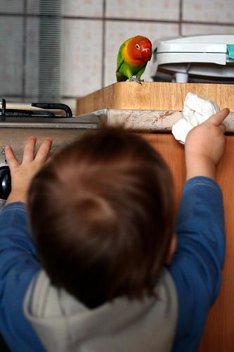 Gyerek és papagáj