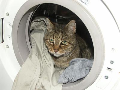 macska-a-mosogepben