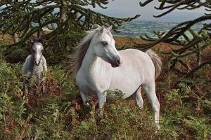 A lovak nyirokérgyulladása (limfangitisz)
