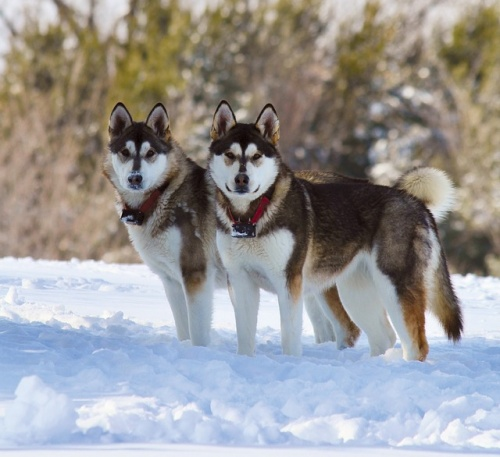 dogs-3440240_640
