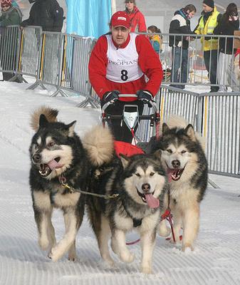 szanhuzo-kutyak