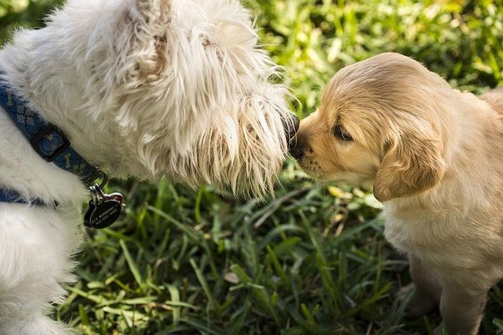 kis-kutya-seta