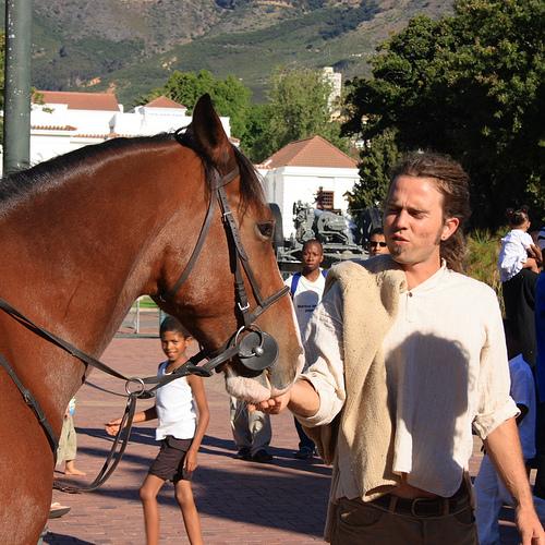 Cape-ló vagy Boer-ló