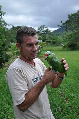 Beszelo papagaj
