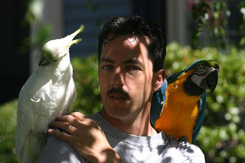 papagaj-tarto_width