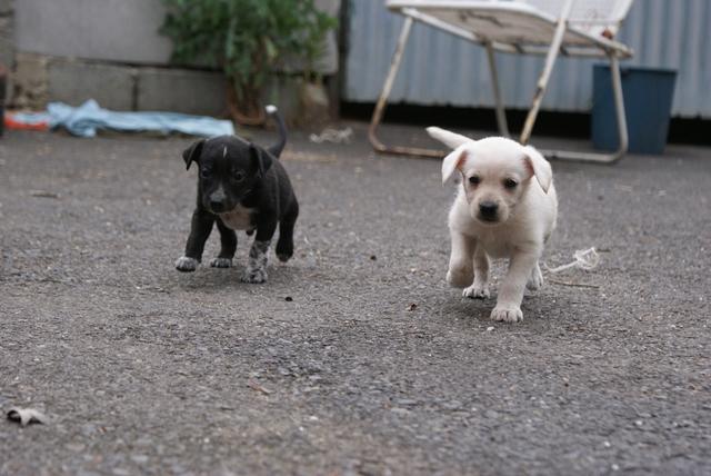 Örökbefogadható kutyák