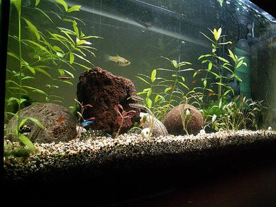 akvarium-gupikkal