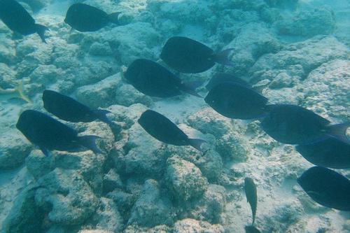 Zajszennyezés halak