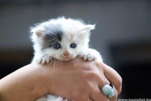 Bolhák a kiscicákon - szabaduljunk meg tőlük mielőbb!