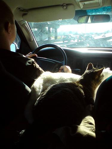 Macskak az autoban