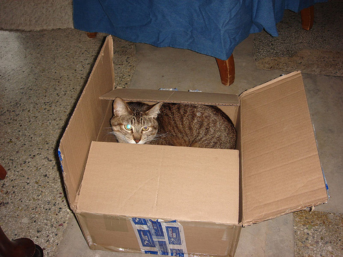 Macska a dobozban