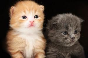 A kiscicák fejlődésének nyomon követése