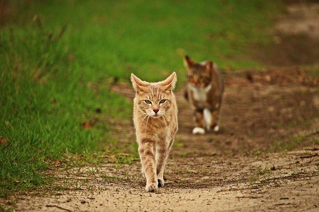 cat-2219169_640