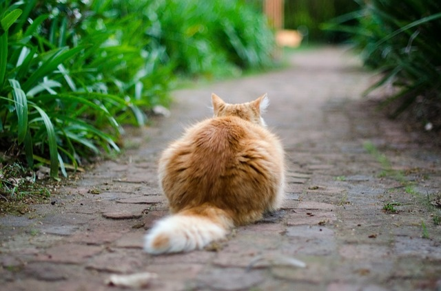 cat-691532_640
