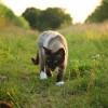 Hogyan kommunikálnak a macskák?