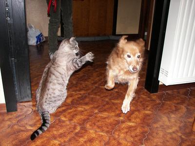 macska-kutyat-ijeszteget