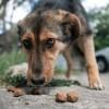 Hogyan kezeljük az agresszív, eledelét féltő kutyát?