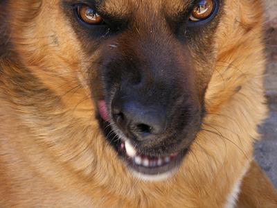 merges-kutya