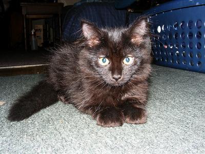 tiffany-kiscica