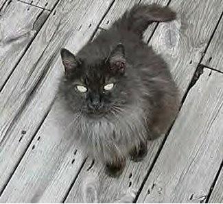 tiffany-macskusz