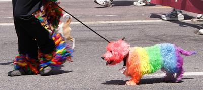 szivarvany-kutya