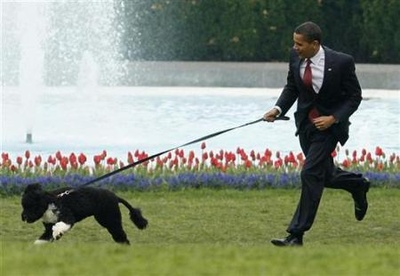 obama-kutyaja