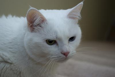 tiffany-macska