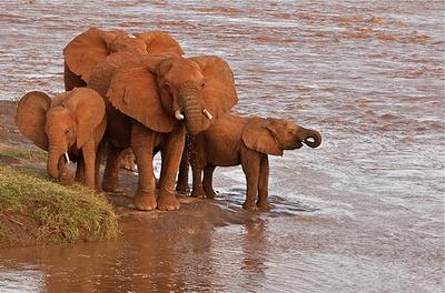 elefantok-a-vizben