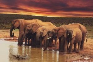 Tények és érdekességek az elefántról