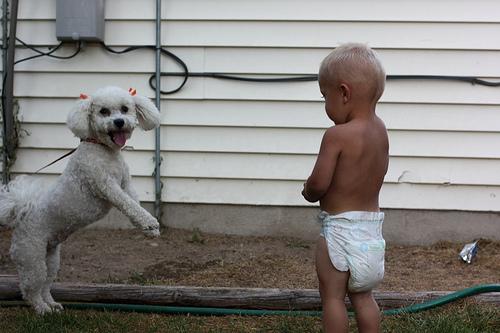 Bichon és csecsemő