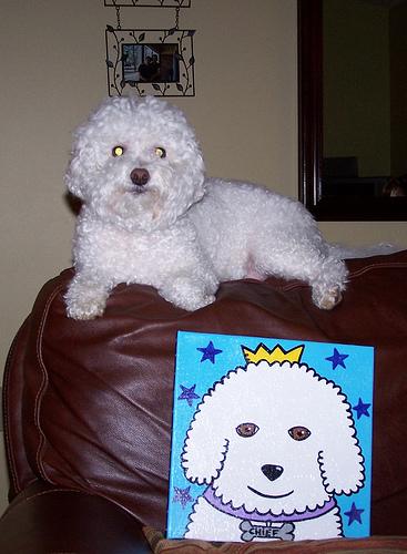 Festő kutya