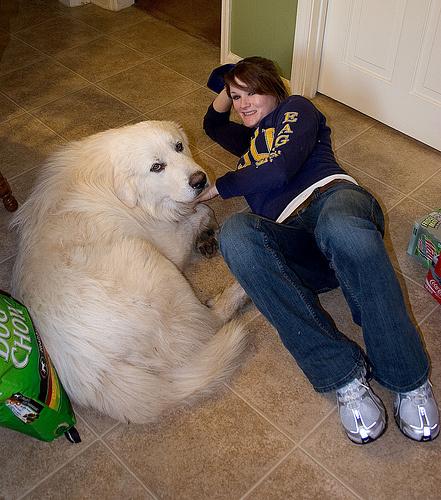hatalmas-kutya