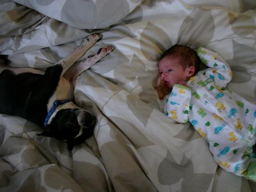 Kutya és kisbaba