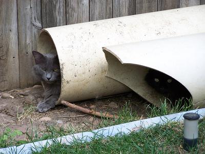 ragamuffin-macskak