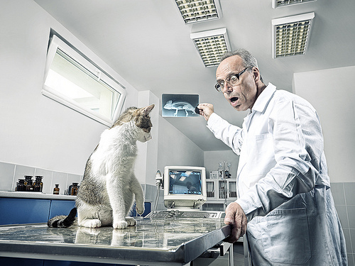 állatorvos, veterinar, rendelő, gyógyítás