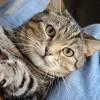 Miért harap meg a macskám, amikor megsimogatom?