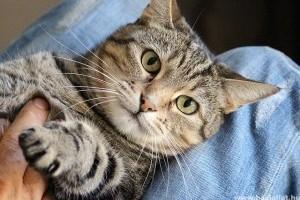 Miért harap a macskám, amikor megsimogatom?